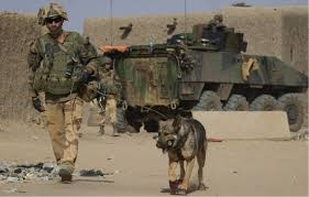 belgian malinois in movies 10 dogs of war in special operations u2013 special forces news
