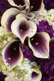just flowers florist 80 best just flowers images on plants pretty flowers