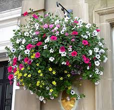 Best Plants For Hanging Baskets by 511 Best Hanging Baskets Images On Pinterest Flower Planters