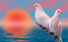 bird wallpapers images of love birds and wallpaper