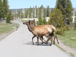 Montana Wildlife Tours images 7 day yellowstone arches mt rushmore bus tour from los angeles jpg