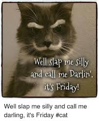Friday Cat Meme - 25 best memes about friday cat friday cat memes