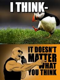 Puffin Meme - image result for puffin memes puffins funny pinterest memes