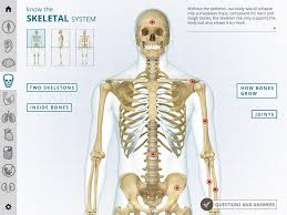 Pictures Of The Human Body Internal Organs I Wow Atlas Human Body Android Apps On Google Play