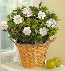 plant of the month club plant of the month club great gifts for gardening
