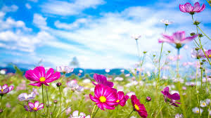 summer flowers wallpapers top hdq summer flowers images