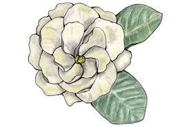 100 gardenia flower tattoo best 20 jasmine flower tattoos