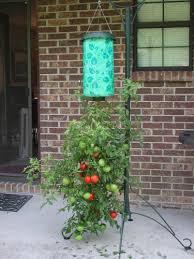 Upside Down Tomato Planter by Amazon Com Felknor Ventures 82506 Topsy Turvy Upside Down Tomato