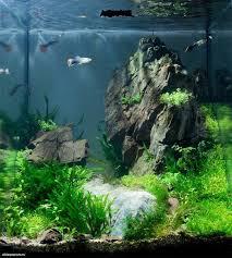 How To Aquascape A Planted Tank 27 Best Aquascapes Images On Pinterest Aquarium Ideas Plants