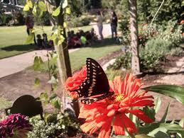 butterfly days 2018 botanical garden of the ozarks