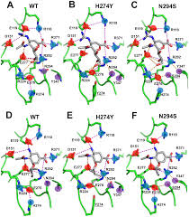 Ft Detrick Map Quantitative Predictions Of Binding Free Energy Changes In Drug