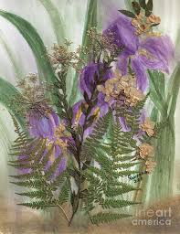 purple iris flowers ferns and queen anne u0027s lace painting by