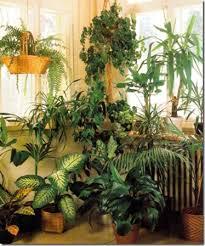 indoor plant display combining green plants in displays