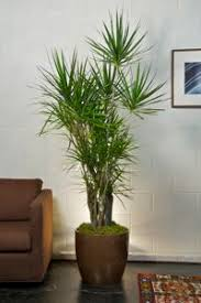 131 best interiores plantas images on pinterest indoor plant
