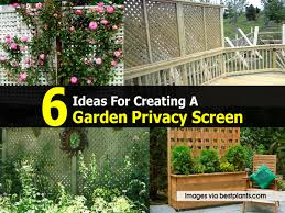 Backyard Landscaping Ideas For Privacy by 6 Ideas For Creating A Garden Privacy Screen