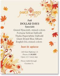fall flyer amitdhull co