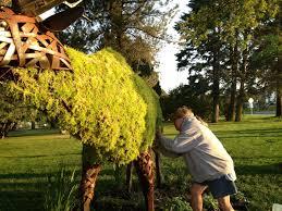 Horse Topiary Bizmojo Idaho Gathering Moss Topiary Elk Goes Green Near