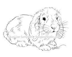 4 bunny rabbit drawings clip art sketches digital stamp or