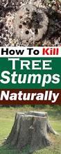 how to kill tree stumps naturally removing tree stump