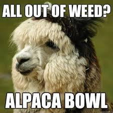 Alpaca Meme - all out of weed alpaca bowl alpaca quickmeme