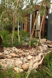 best 25 australian native garden ideas on pinterest australian