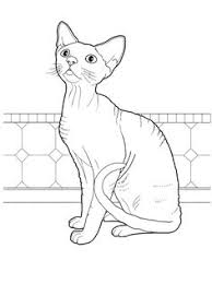 tabby cat coloring pages cat 22 cats coloring pages for teens and adults favorite cat