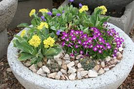 Rock Gardening Plant Select Petites Plants For Rock Gardens Small Space