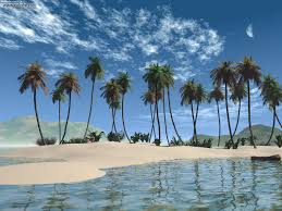 beach with palm trees hd background wallpaper 38 the beauty palace