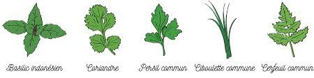 plante aromatique cuisine le coffret de plantes aromatiques petit jardin d aromates à faire
