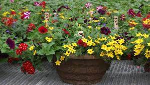 annual flowers pots 1000 images about container garden recipe on