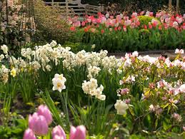 Best Spring Flowers - best spring bulbs for the rocky mountains