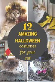 Halloween Costumes Cats 12 Amazing Halloween Costumes Cat Cat Lady Confidential