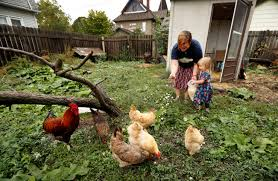 backyard chicken trend causes spike in infections including a