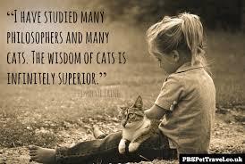 Comfort Quote Top Cat Quotes Pbs Pet Travel