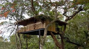tree house archives local kerala expert