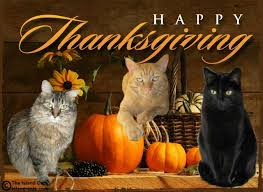 happy thanksgiving the island cats every cat wants to be an