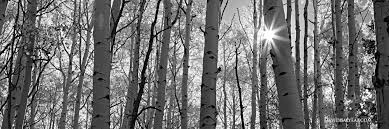 forests trees archives david balyeat photography portfolio
