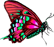 butterfly clipart side view