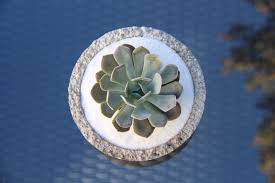 Succulents That Don T Need Light How To Plant Succulent Bowls