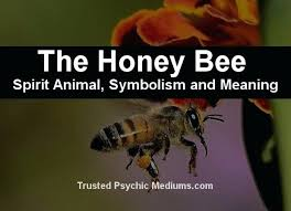in house meaning bees in the house meaning harmonyradio co