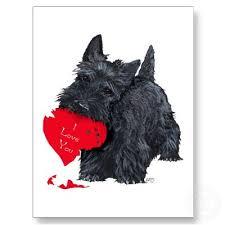 188 best westie and scottie dogs images on westies