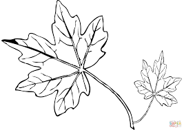 maple leaf coloring page free printable coloring pages
