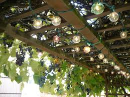 grape vine trellis photo build a grape vine trellis idea