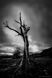 the lightning tree fights