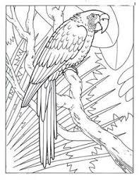 parrots coloring pages parrot coloring page animals town animals color sheet parrot