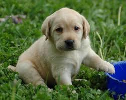 puppy thanksgiving kiddzz