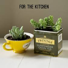 best 25 diy terrarium ideas on pinterest terrarium diy