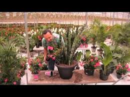 Frankie Flowers - 21 best container gardening images on pinterest flower gardening