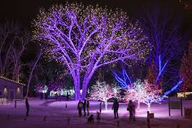 hudson gardens christmas lights commercial gallery swingle landscape lawn care tree service