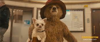 paddington movie paddington bears